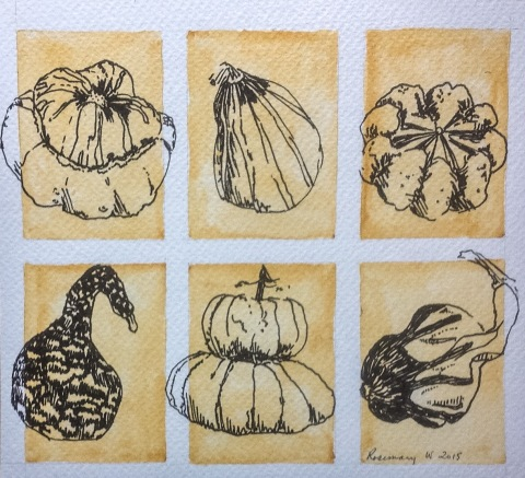 Pen and ink sketches of squashes and pumpkins