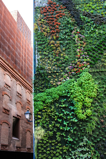 Living wall designed by French botanist Patric Blanc