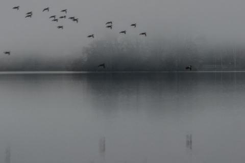 Foggy February morning at Green Lake
