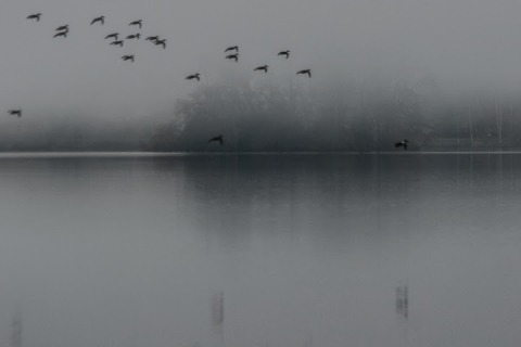Foggy February morning at Green Lake