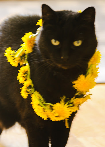 Jellybean with dandelion garland