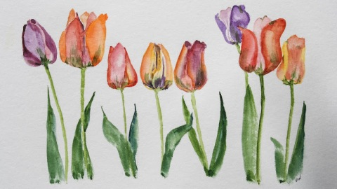 Watercolor sketch of tulips in a row