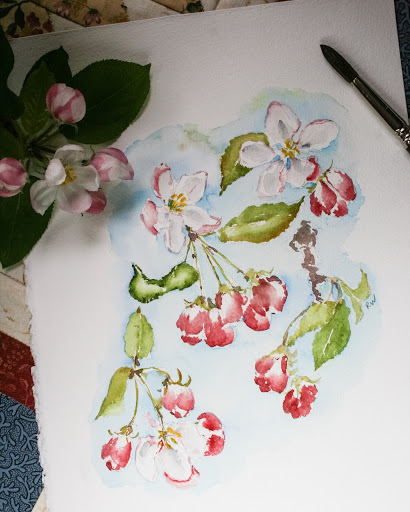 Watercolor sketch of apple blossoms