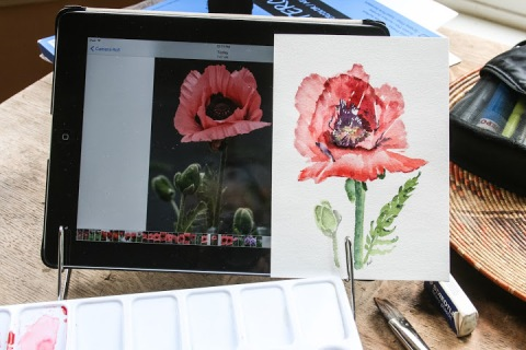 My first watercolor sketch of this single poppy