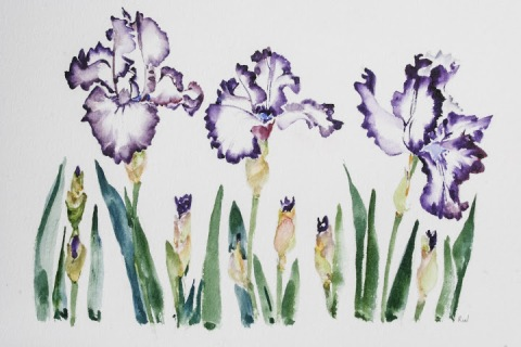 Part one of my watercolor painting of irises in a row