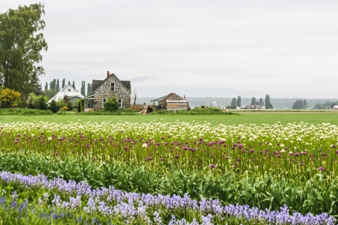 Farm in the Skagit Valley