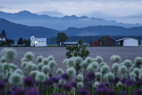 The Skagit Valley awakens