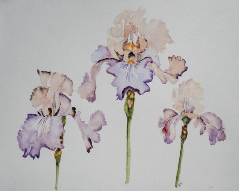 Watercolor painting of 'Pond Lily' irises