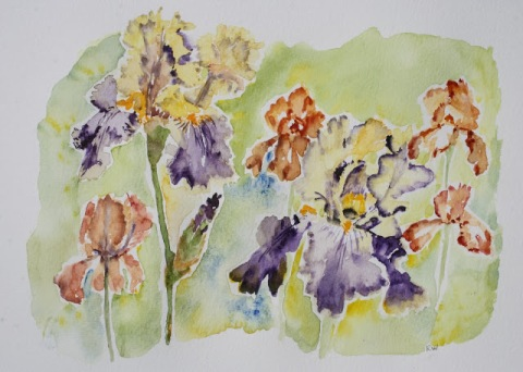 Last week's watercolor painting of irises