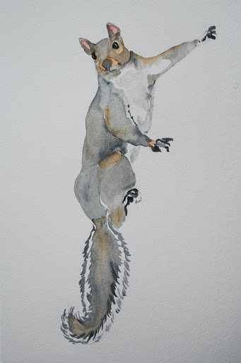 Another watercolor sketch of a squirrel