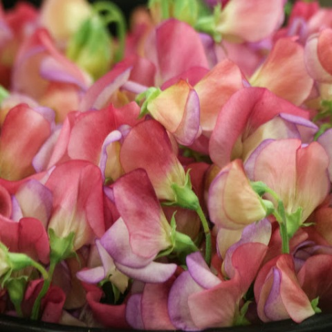 Sweet peas from Jello Mold Farm at the Seattle Wholesale Growers' Market