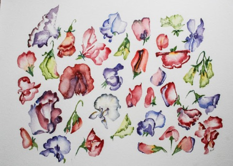 Sweet pea studies ( a few good ones in there)