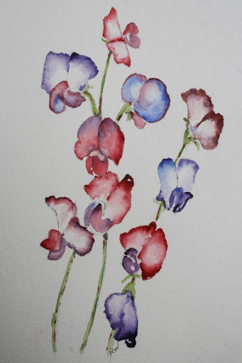 Watercolor sketch of everlasting pea vines