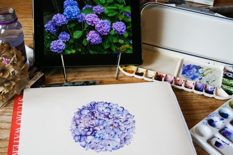 Watercolor sketch of hydrangea