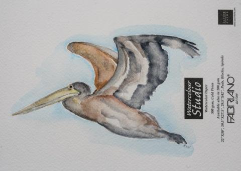 Watercolor sketch of brown pelican in flight