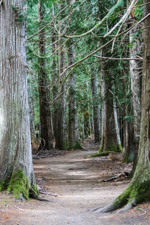 Moments in Time trail through old growth forest