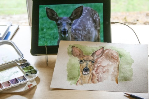 Watercolor sketch of fawn