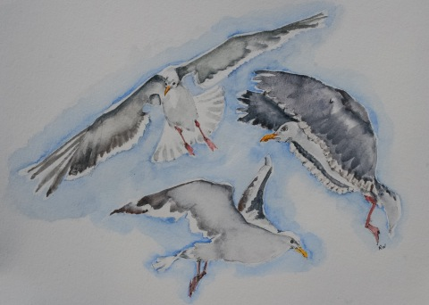 Another watercolor sketch of seagulls