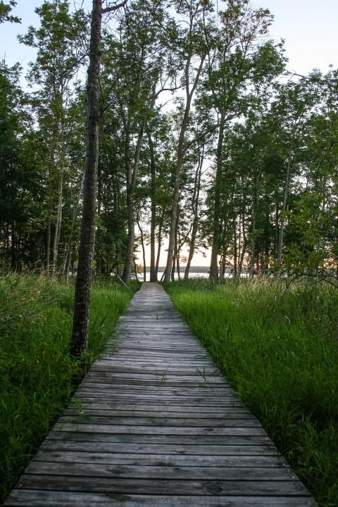 Boardwalk down to the lake