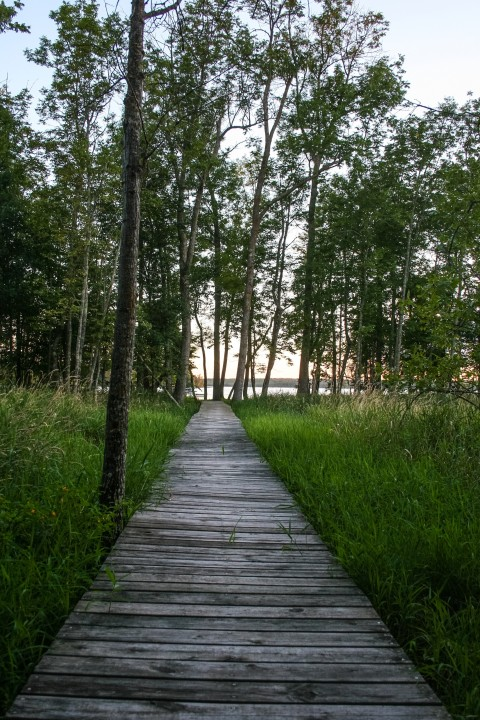 Boardwalk down to the lake