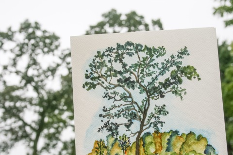 Watercolor sketch of one of the old oak trees on the farm