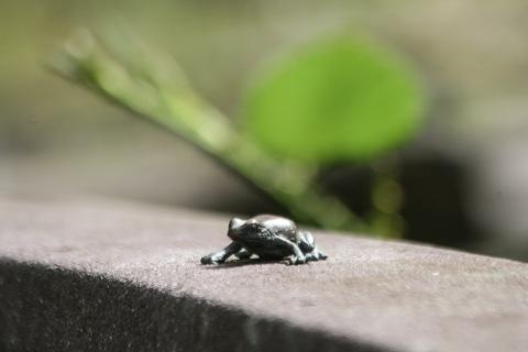 Tiny frog sculpture on boardwalk
