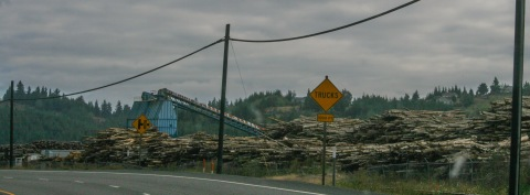 Logging country (One day we counted 24 logging trucks during our drive)