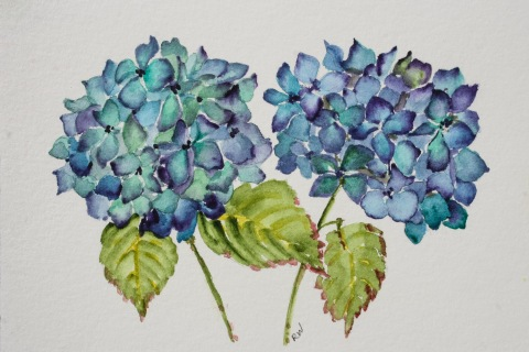 Watercolor sketch of hydrangeas
