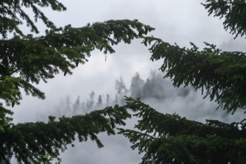 We ascended the road to Hurricane Ridge in a cloud.