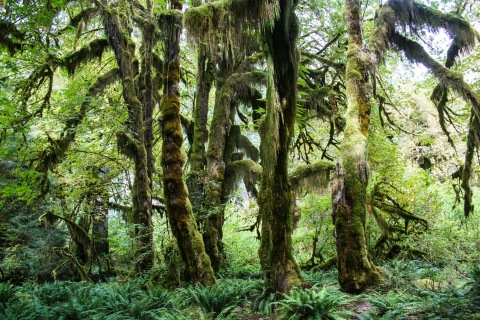Along the Hall of Mosses Trail