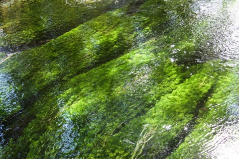 Green stream bed