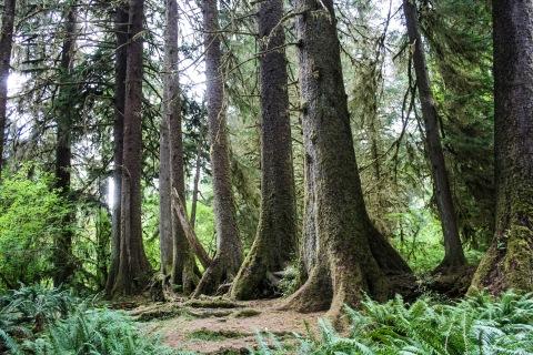 Spruce Loop Trail