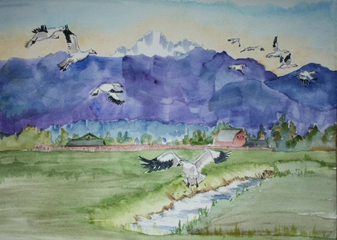 Watercolor painting of Skagit Valley snow geese