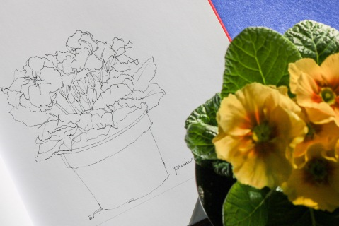 Ink sketch of primroses (primula)