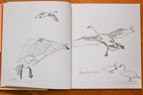 Sketchbook, line drawings of Skagit swans