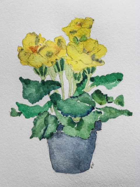 Pot of yellow primroses
