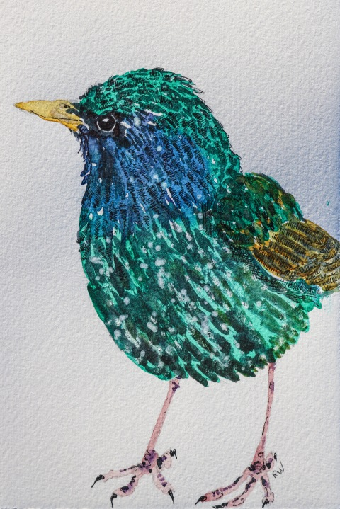 Starling in watercolor and ink