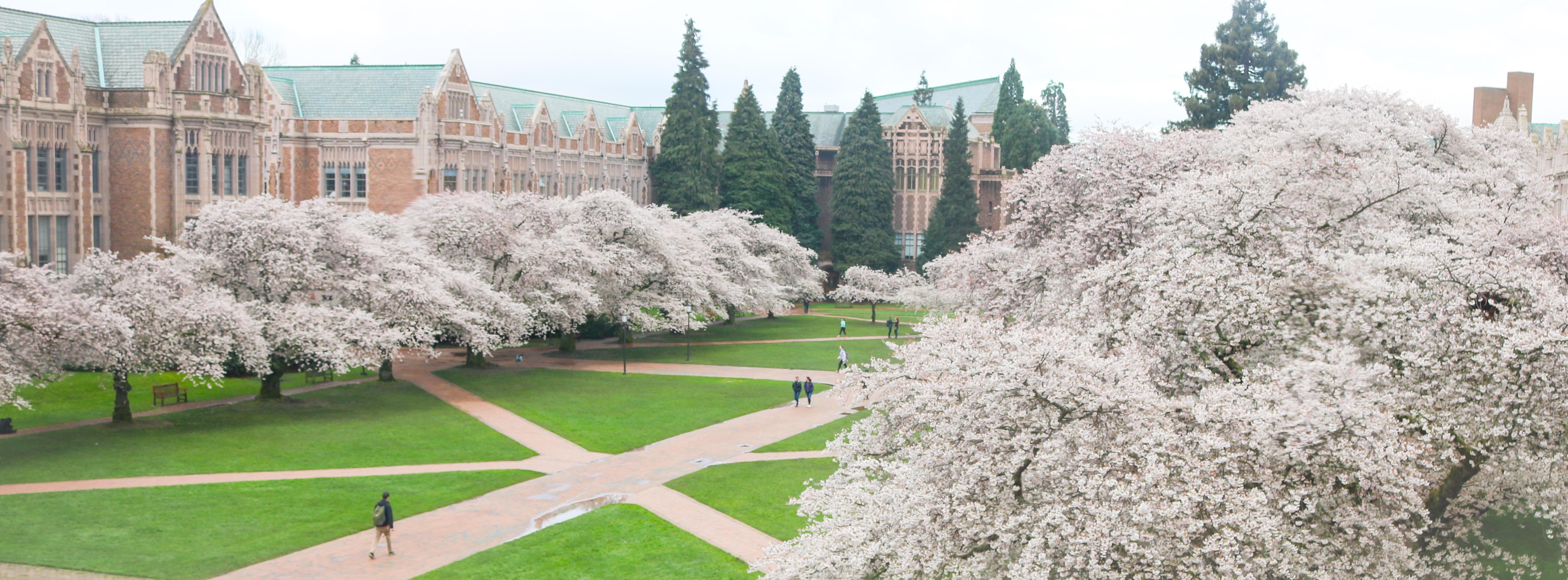 Yoshino Cherry Trees Rosemary S Blog